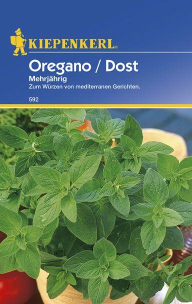 Oregano / Dost 'Mehrjährig'