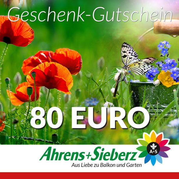 Geschenk-Gutschein, Wert 80 Euro Sommerfreude