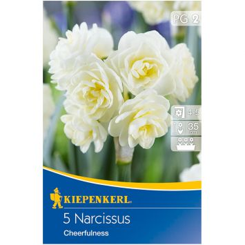 Narzisse `Cheerfulness` - Blumenzwiebel