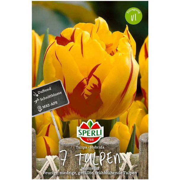 Gefüllte, frühe Tulpen 'Monsella'